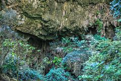 Beschaffenheit Nationalparks Gunung Mulu von Sarawak, Malaysia stockfotos
