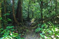 Beschaffenheit Nationalparks Gunung Mulu von Sarawak, Malaysia lizenzfreies stockbild