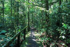 Beschaffenheit Nationalparks Gunung Mulu von Sarawak, Malaysia stockfoto