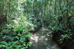 Beschaffenheit Nationalparks Gunung Mulu von Sarawak, Malaysia lizenzfreie stockfotos