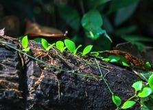 Beschaffenheit Nationalparks Gunung Mulu von Sarawak, Malaysia lizenzfreie stockfotografie