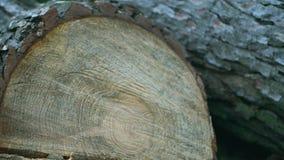 Beschaffenheit, Schnitt eines Baums stock video