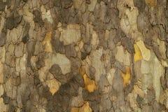 Beschaffenheit und Farben der Barke dieses Baums lizenzfreie stockfotos