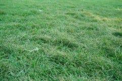 Beschaffenheit und Hintergrund des grünen Grases Lizenzfreies Stockbild
