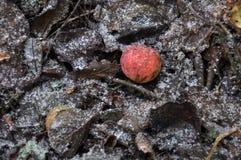 Beschaffenheit und Hintergrund von Äpfeln auf gefrorenem Boden Lizenzfreie Stockfotografie