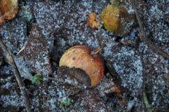 Beschaffenheit und Hintergrund von Äpfeln auf gefrorenem Boden Lizenzfreie Stockfotos