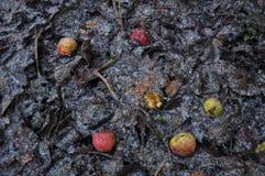 Beschaffenheit und Hintergrund von Äpfeln auf gefrorenem Boden Lizenzfreie Stockbilder