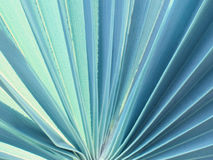 Beschaffenheit und Muster eines grünen Blattes Abbildung der roten Lilie Lizenzfreie Stockfotos