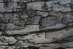 Beschaffenheit vom Baum Lizenzfreies Stockbild