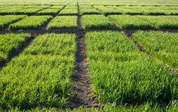 Beschaffenheit vom grünen Gras Lizenzfreies Stockfoto