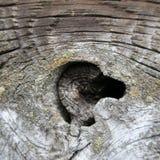 Beschaffenheit von altem, von der Weinlese, Regen und Wind, verwitterte Holz t Stockfoto