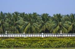 Beschaffenheit von Asien, Palme Stockbild