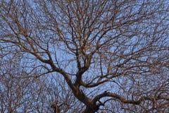 Beschaffenheit von Baumasten verzweigter Baum bei Sonnenuntergang lizenzfreie stockbilder