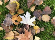 Beschaffenheit von Blättern auf dem Gras lizenzfreie stockfotografie