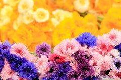 Beschaffenheit von bunten Kornblumen, Hintergrund (Centaurea) Stockbild