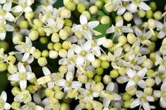 Beschaffenheit von kleinen Blumen Lizenzfreie Stockbilder