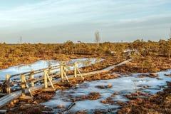 Beschaffenheit von Lettland, großer Kemeri-Sumpf: Panoramische Herbstlandschaft mit hölzernem Weg über dem Sumpf bei Sonnenunterg lizenzfreie stockfotos