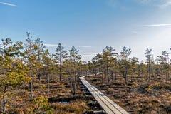 Beschaffenheit von Lettland, großer Kemeri-Sumpf: Panoramische Herbstlandschaft mit hölzernem Weg über dem Sumpf Fallnaturhinterg lizenzfreie stockbilder