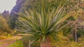 Beschaffenheit von Madeira-Insel Stockfotos