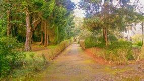 Beschaffenheit von Madeira-Insel Stockfotografie