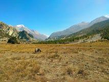 Beschaffenheit von Nepal ist faszinierend schön stockbild