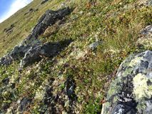 Beschaffenheit von Norwegen Stockbilder