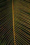 Beschaffenheit von Palmblättern Stockbild