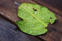 Beschaffenheit von Tröpfchen auf grünem Blatt Lizenzfreies Stockbild