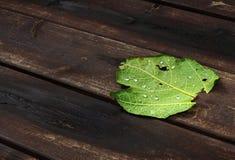 Beschaffenheit von Tröpfchen auf grünem Blatt Stockbild