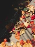Beschaffenheit von trockenen Blättern, rotes Blatt auf der Straße stockbild