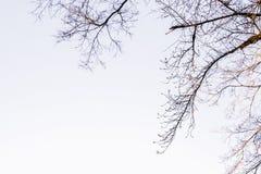 Beschaffenheit von trockenen Zweigen mit Himmel lizenzfreie stockbilder