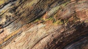 Beschaffenheiten des alten Holzes stockfotos