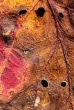 Beschaffenheiten des trockenen Herbstblattes Stockfoto