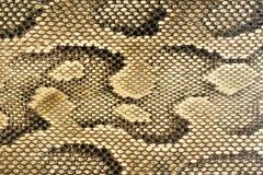 Beschaffenheiten - Snakeskin #1 Stockfotografie