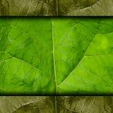 BESCHAFFENHEITS-Hintergrundtapete des grünen Baums des Blattes Makro Stockbilder