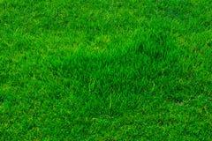 Beschaffenheits-Rasenfläche Stockbild