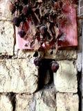 Beschaffenheits-Wand - Wand mit Trockenblumen stockfoto