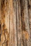 Beschaffenheitsbaum 2 Lizenzfreie Stockfotografie