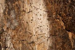 Beschaffenheitsbaum 4 stockfotografie