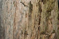 Beschaffenheitsbaum 6 stockbild