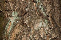 Beschaffenheitsbaum 7 Stockfoto