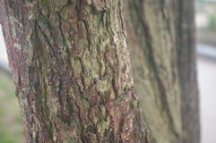 Beschaffenheitsbaum im Park lizenzfreie stockfotos
