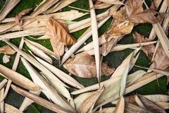 Beschaffenheitsherbsthintergrund von getrockneten tropischen Blättern Lizenzfreies Stockfoto