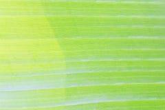 Beschaffenheitshintergrund der Hintergrundbeleuchtung Lizenzfreies Stockbild