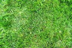 Beschaffenheitshintergrund des grünen Grases Stockfotografie