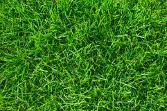 Beschaffenheitshintergrund des grünen Grases Stockbild