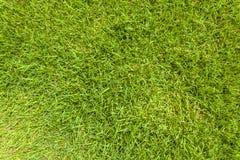 Beschaffenheitshintergrund des grünen Grases Lizenzfreies Stockfoto