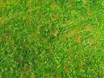 Beschaffenheitshintergrund des grünen Grases Stockfotos