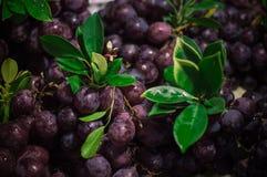 Beschaffenheitstapeten und -hintergrund der roten Trauben Stockfotos