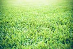 Beschaffenheitsunschärfen des grünen Grases mit goldenem Licht bei Sonnenuntergang für den Hintergrund Lizenzfreie Stockfotos
